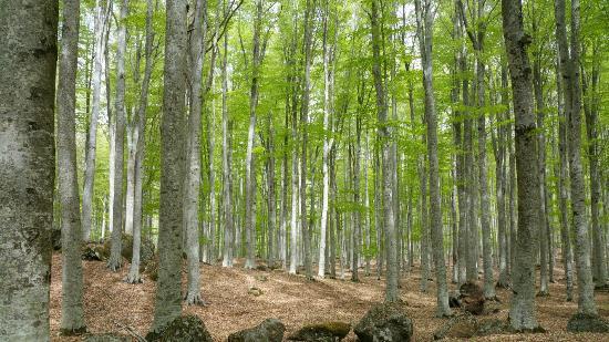 Ritiro Monte Amiata- boschi